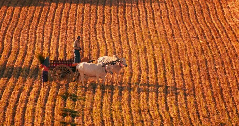 bagan horse riding tour full day 2
